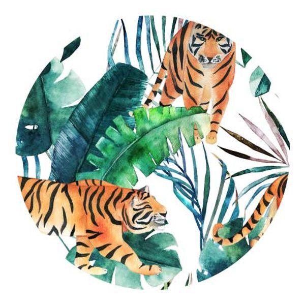 Individual redondo tigre